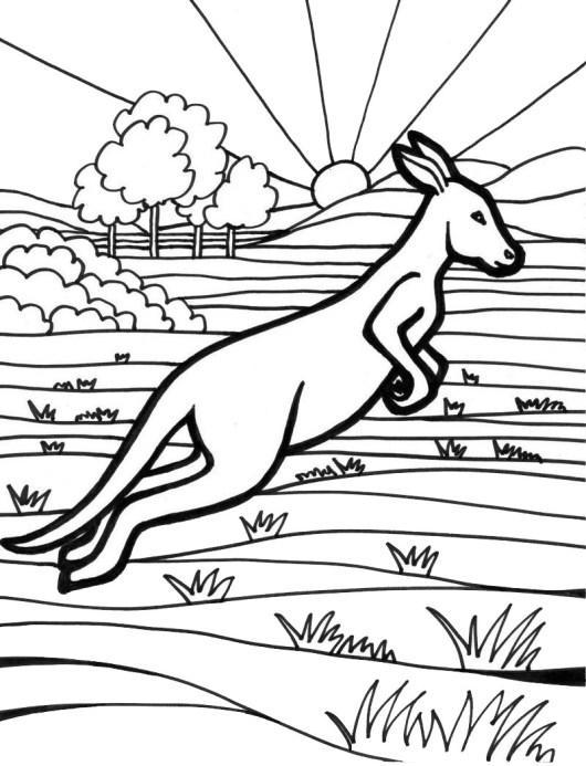 kangaroo animal australia coloring picture