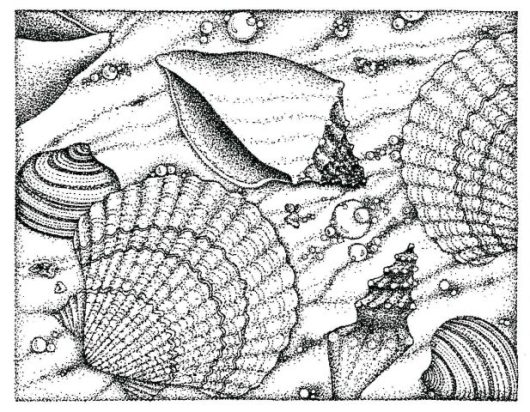 realistic various seashell coloring sheet