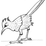 road runner chaparral bird coloring sheet