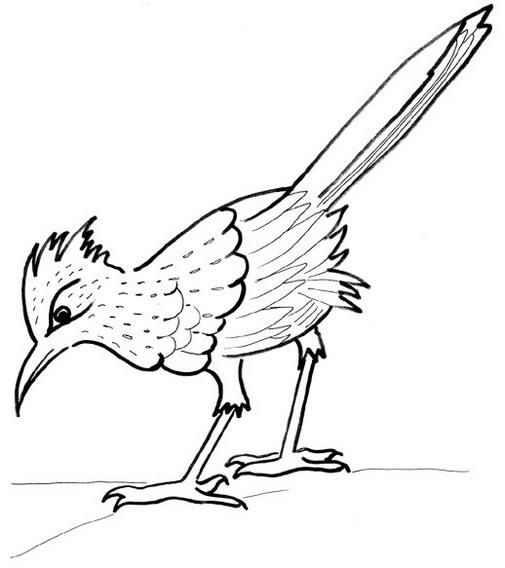 road runner chaparral bird coloring sheet