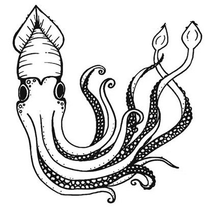 squid coloring page preschool # 40