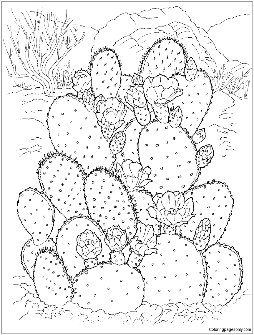 Prickly Pear Cactus Coloring Page Free Coloring Pages Online