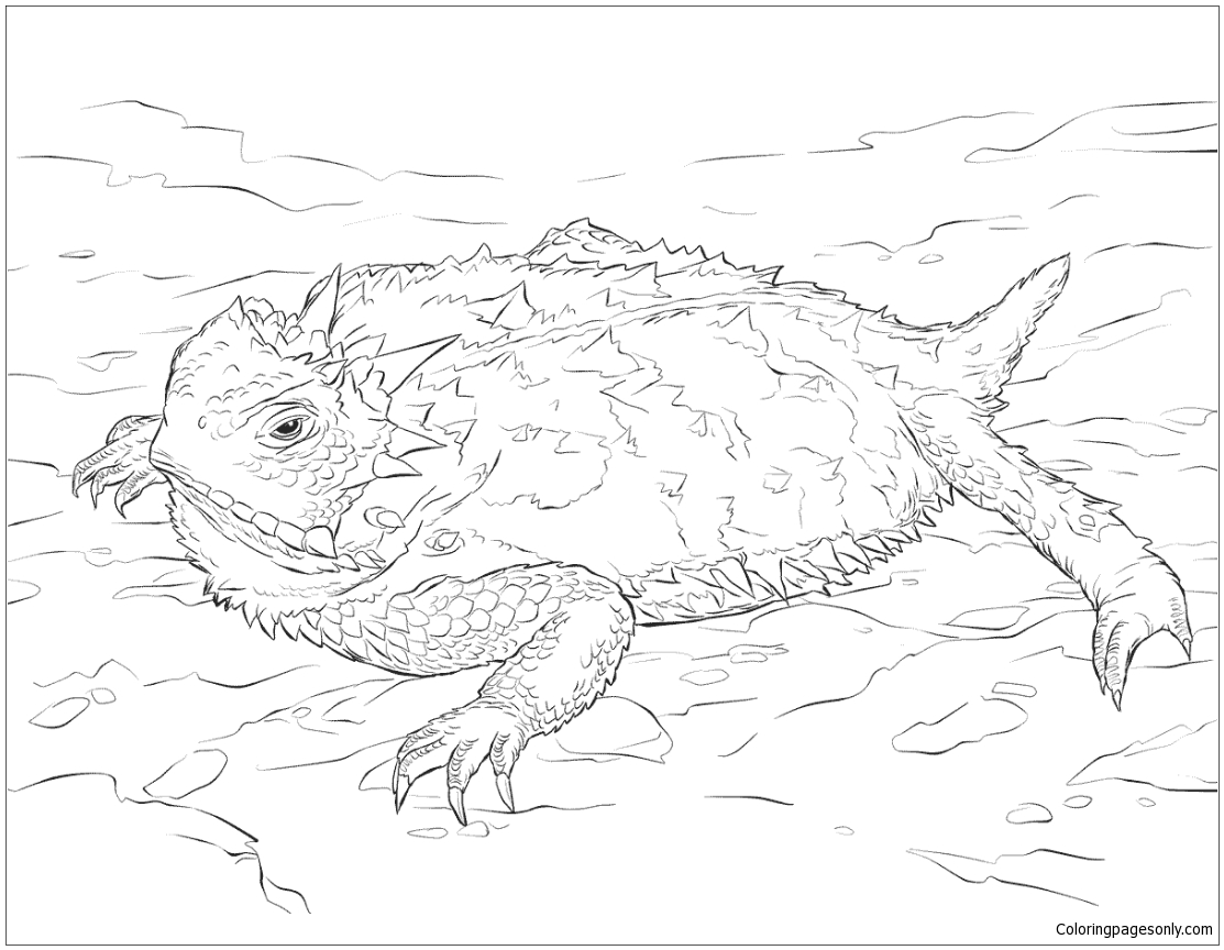 Realistic Texas Horned Lizard Coloring Page Free Coloring Pages