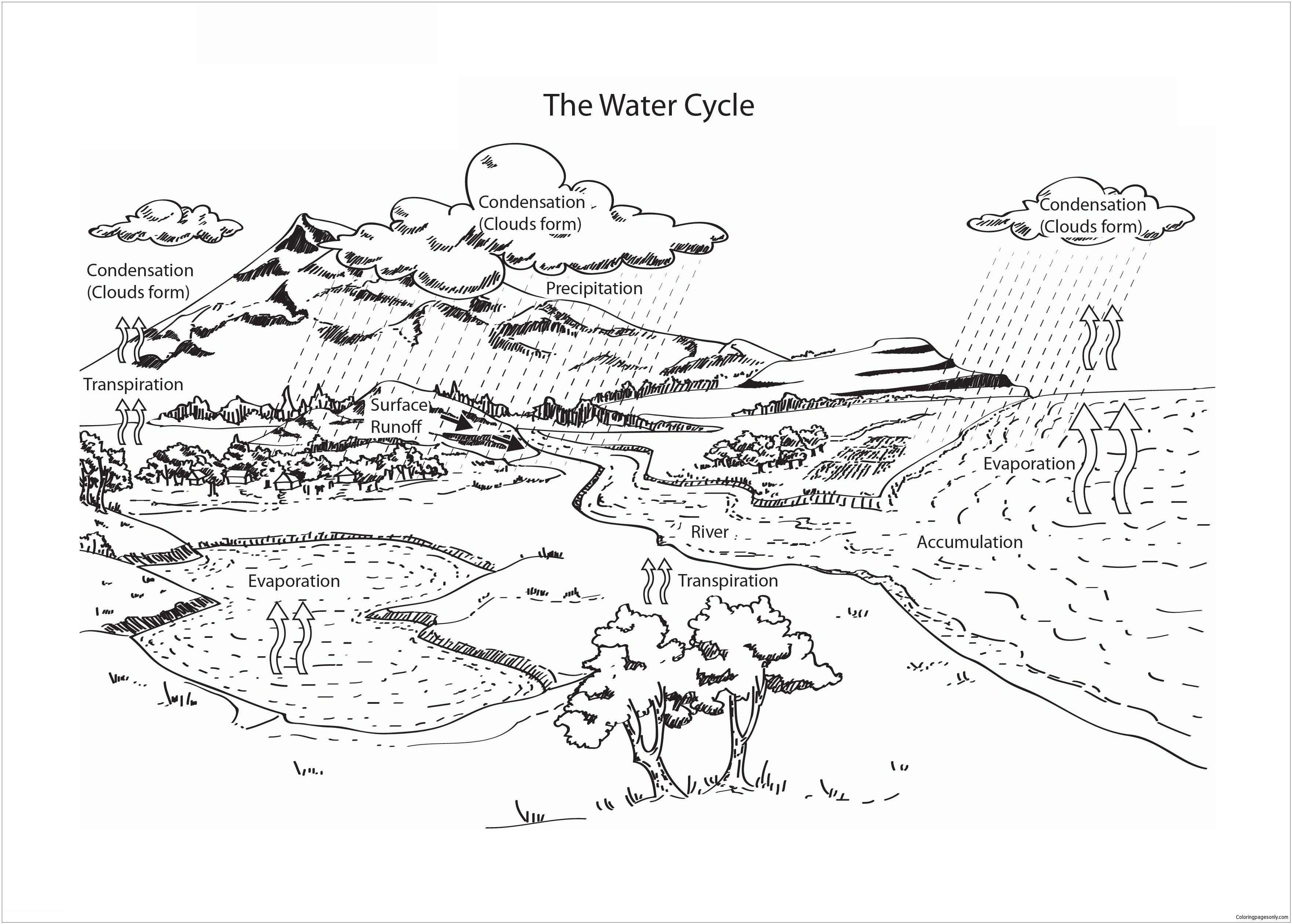 Water Cycle 4 Coloring Page