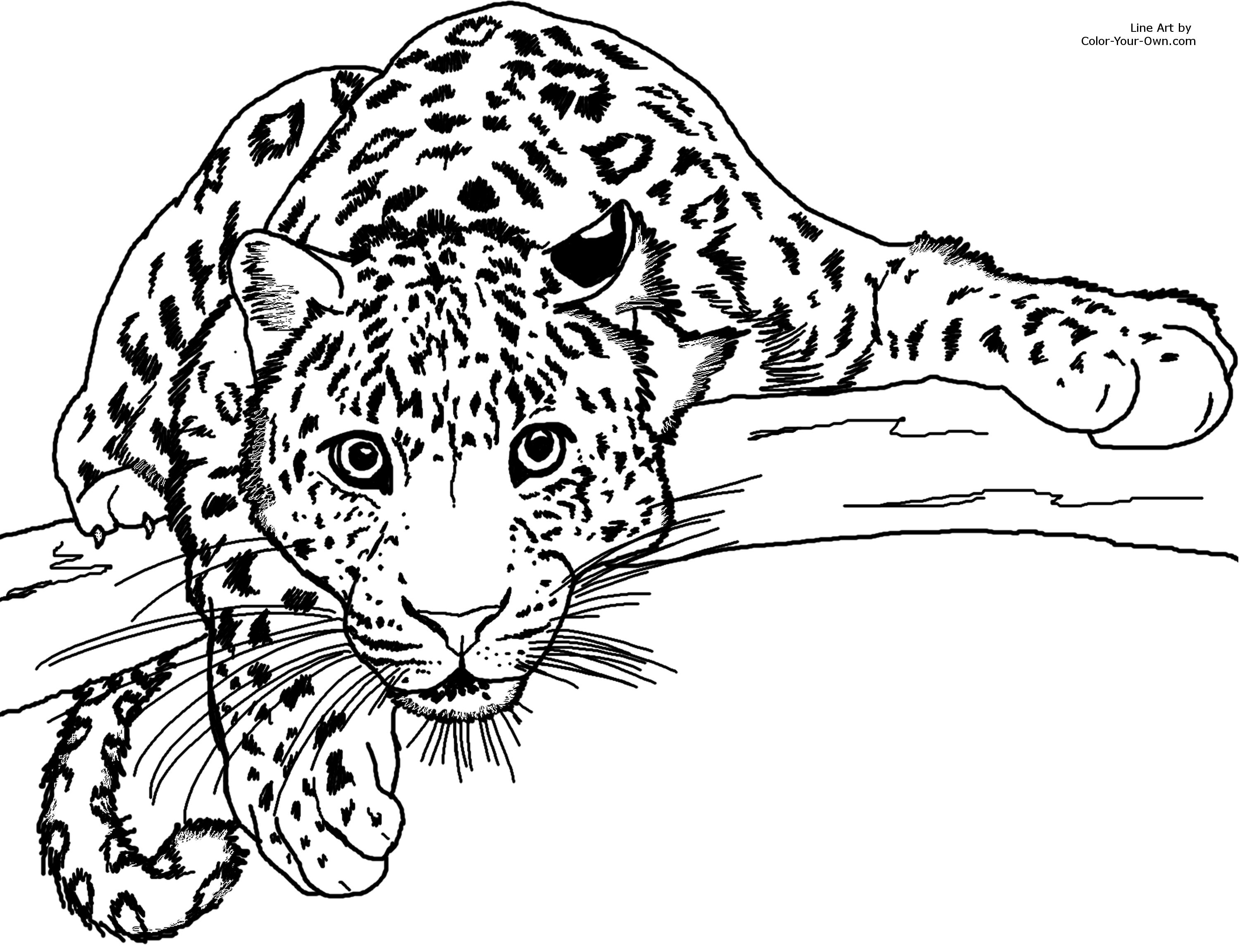 Jaguar Coloring Pages To Download And Print For Free
