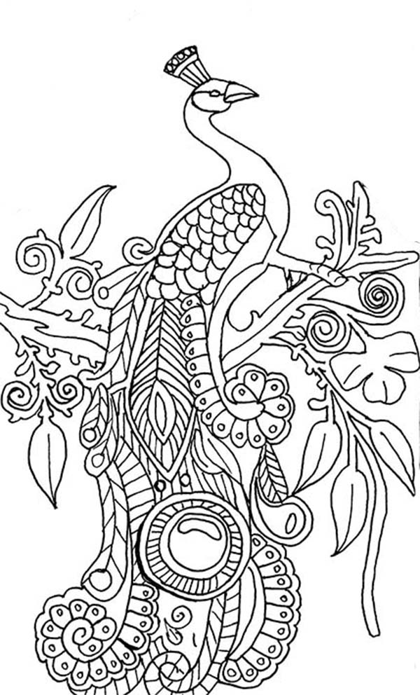 Peacock Coloring Pages To Download And Print For Free