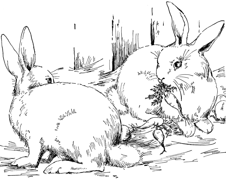 baby bunny coloring pages baby bunny coloring pages az coloring
