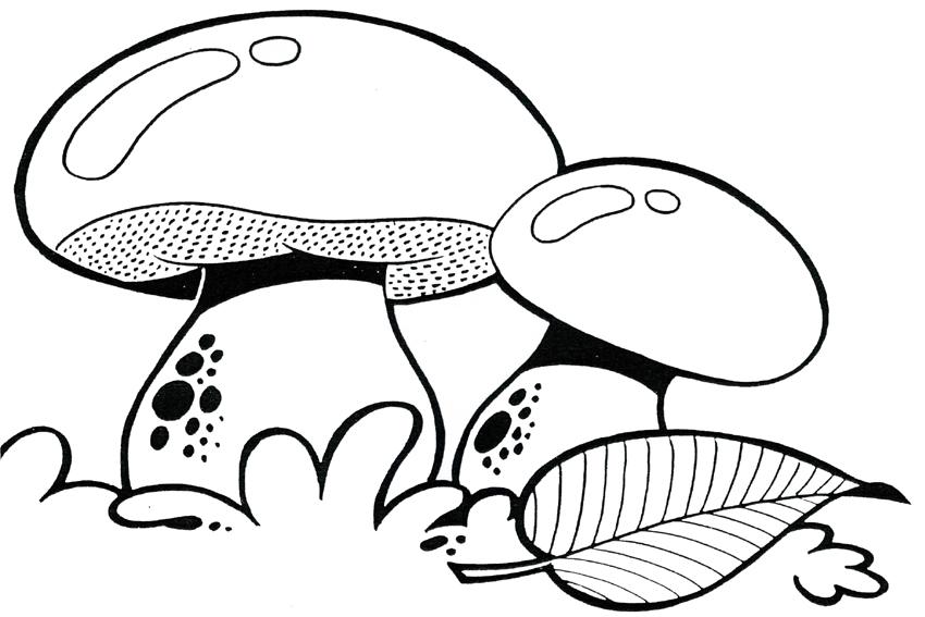 Cute Mushroom Coloring Pages Novocom Top