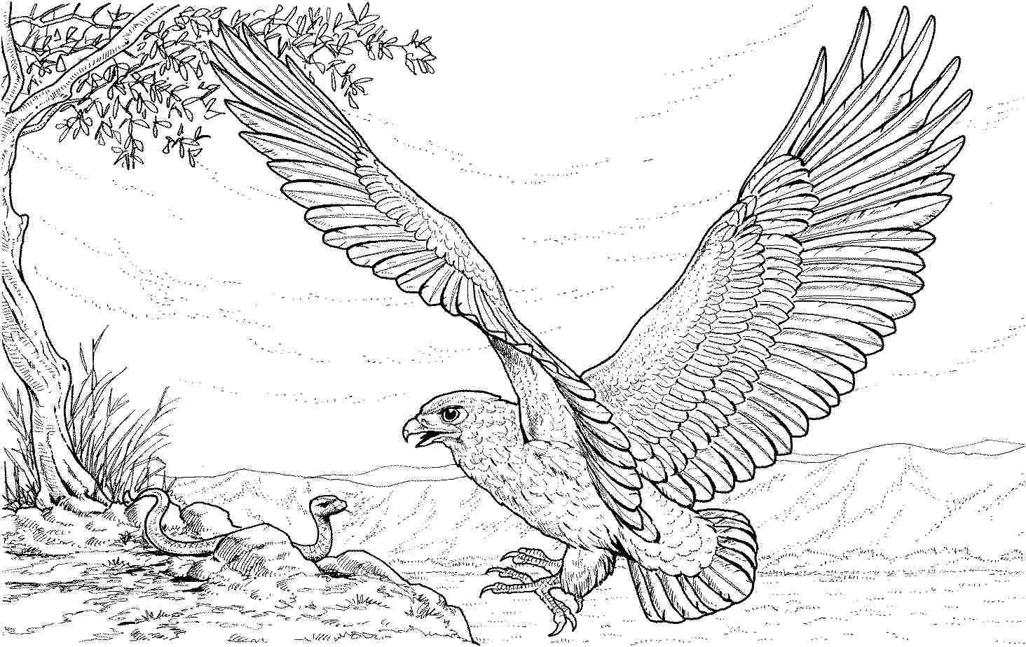Eagle Coloring Pages To Download And Print For Free