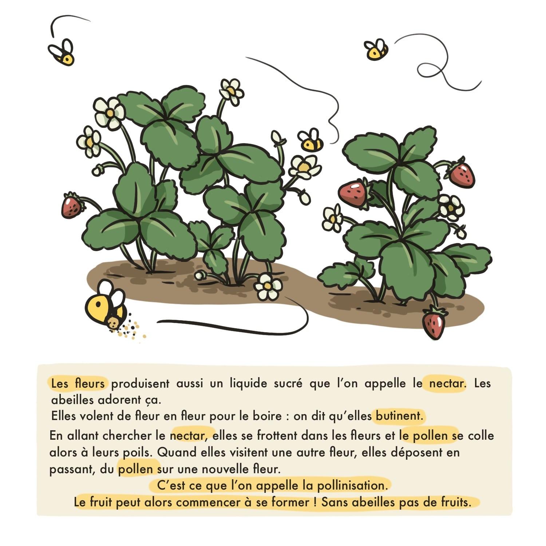 illustration : le rôle des abeilles
