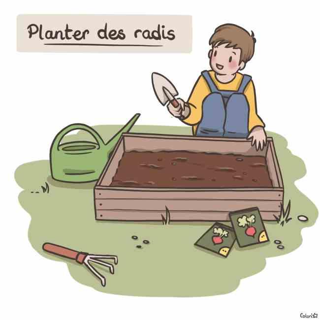 Illustration : planter les radis