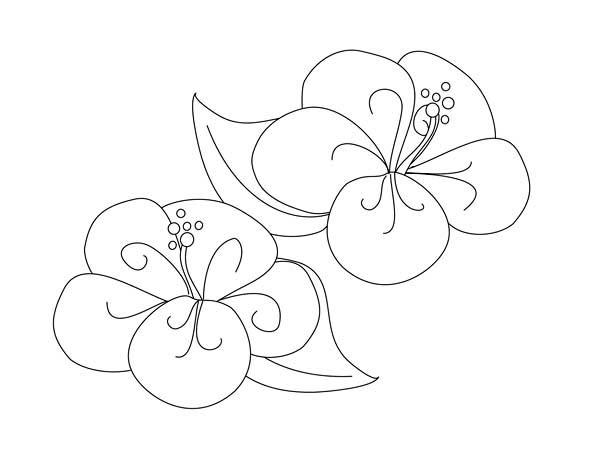 Fancy Hibiscus Flower Coloring Page Color Luna