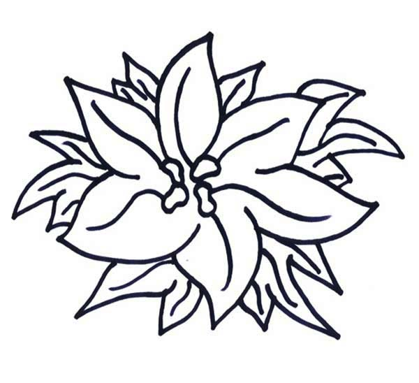 happy new year poinsettia coloring page  color luna