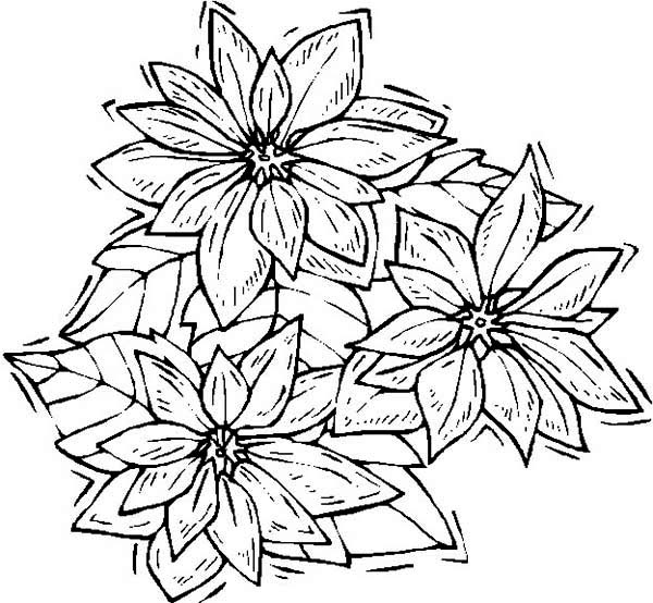 shaking poinsettia coloring page  color luna