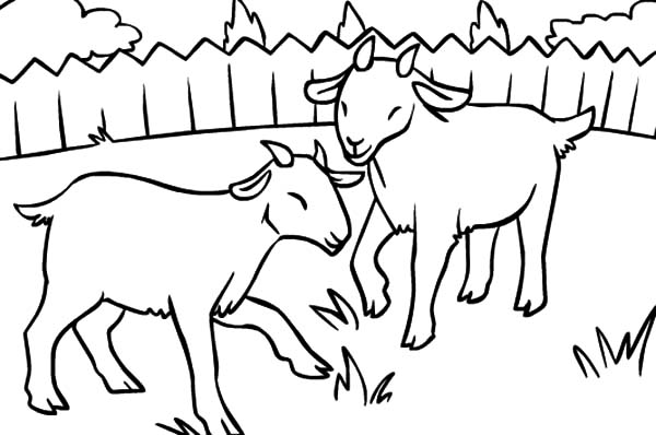 two litte goat eating grass coloring pages  color luna