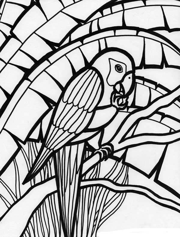 Amazing Parrot Coloring Page Download Amp Print Online