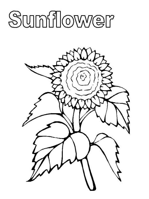 My Sunflower Coloring Page Download Amp Print Online