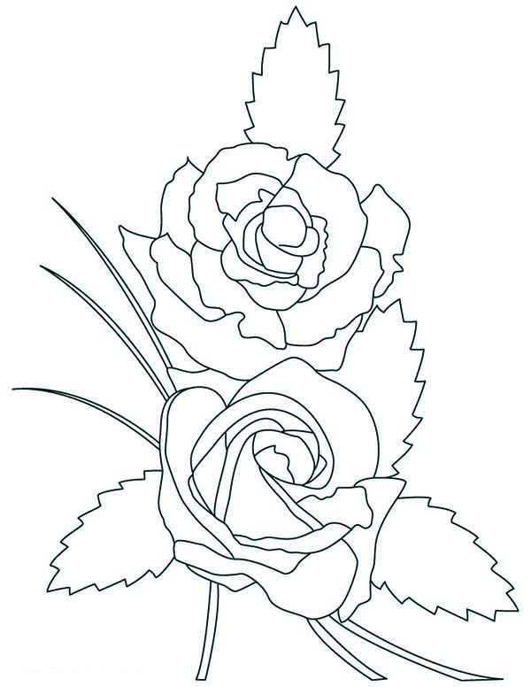 Two Beautiful Rose Coloring Page Download Print Online Coloring Pages For Free Color Nimbus