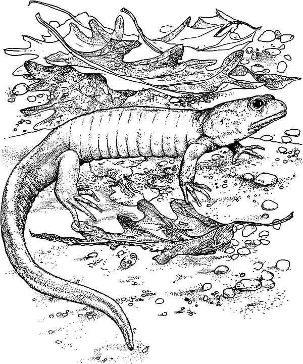 Komodo Dragon Full Stomach Coloring Pages - Download ...