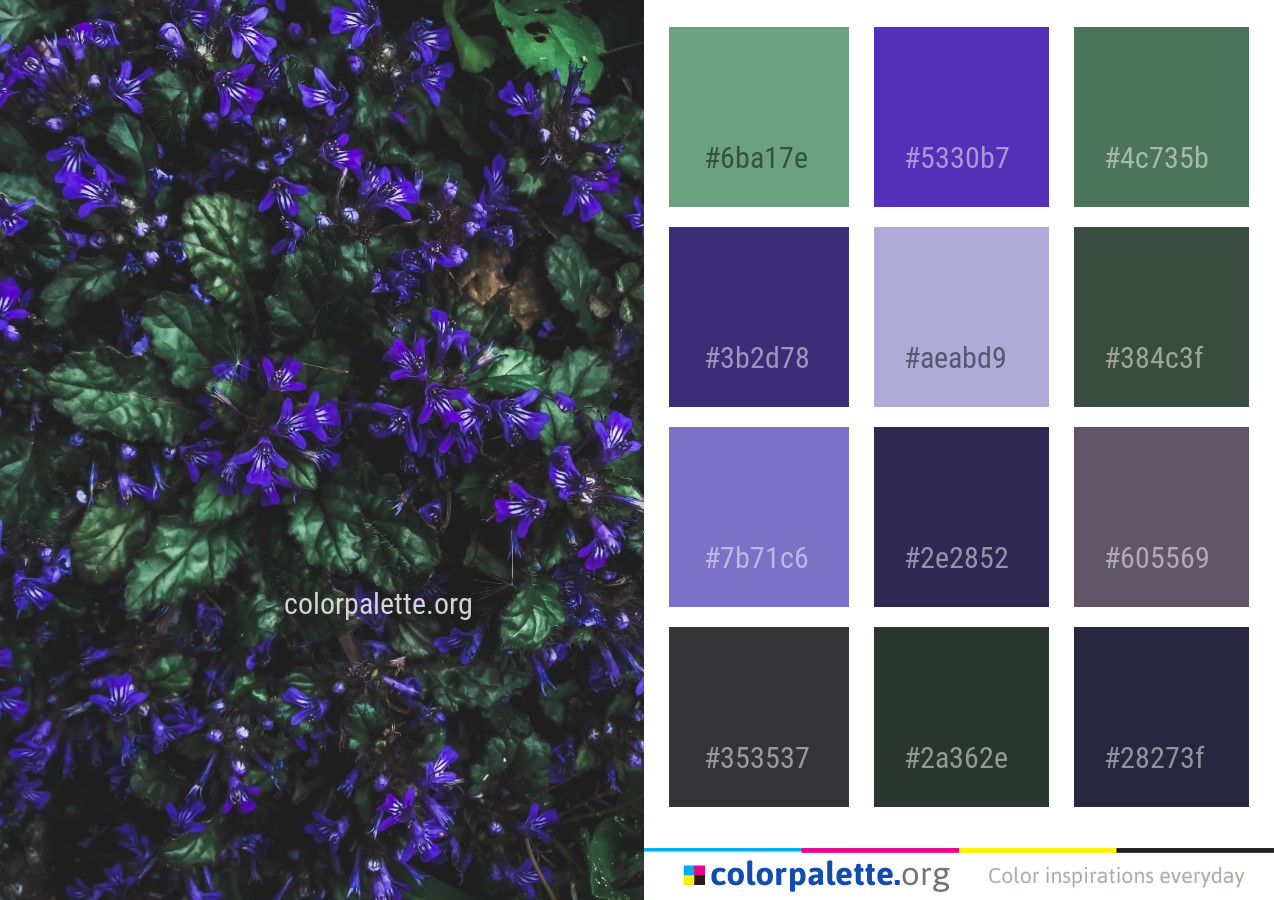 Blue Purple Violet Color Palette Colorpalette Org