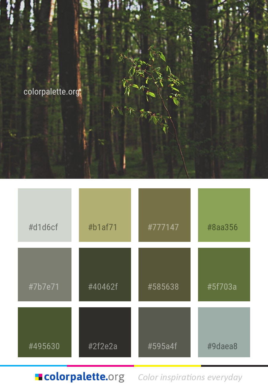 Ecosystem Nature Forest Color Palette Colorpalette Org