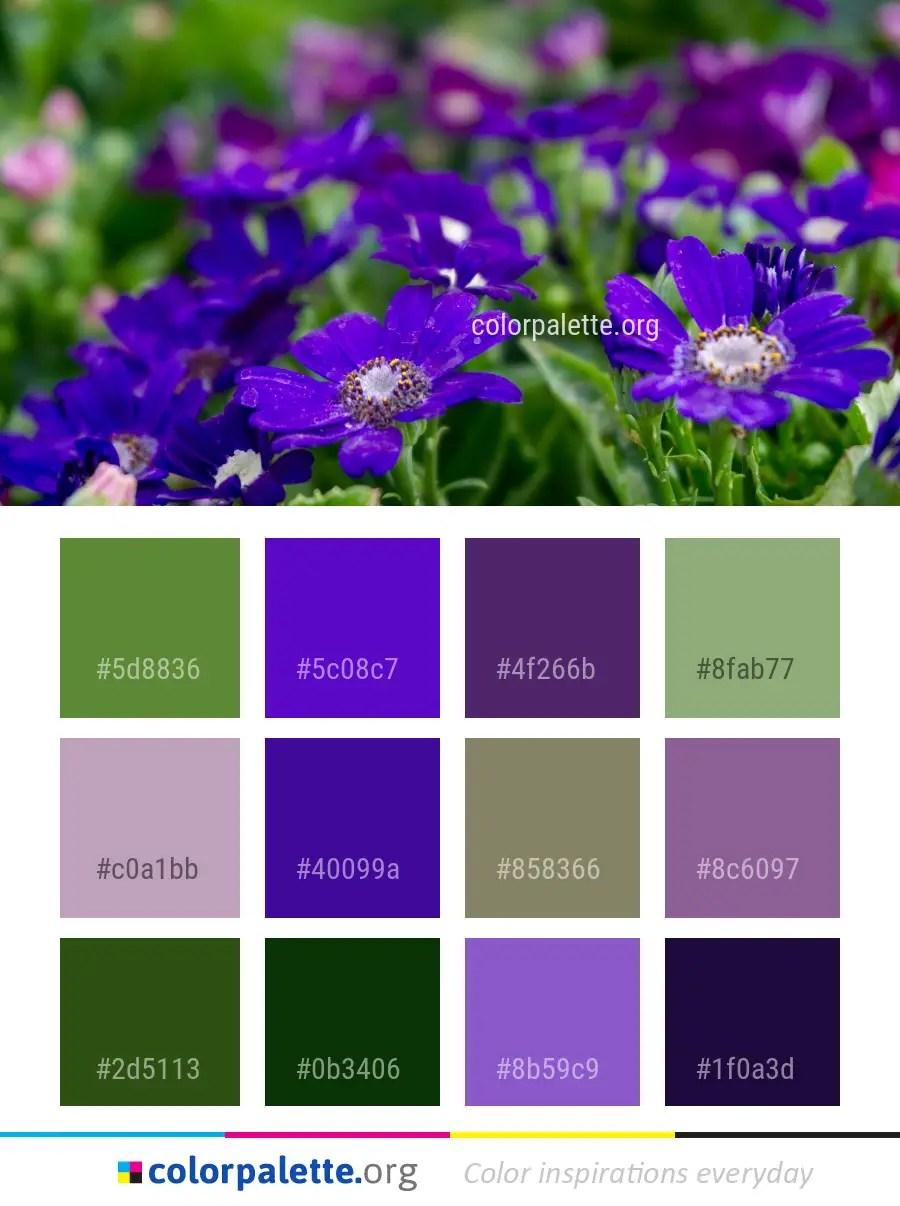 Flower Blue Purple Color Palette Colorpalette Org