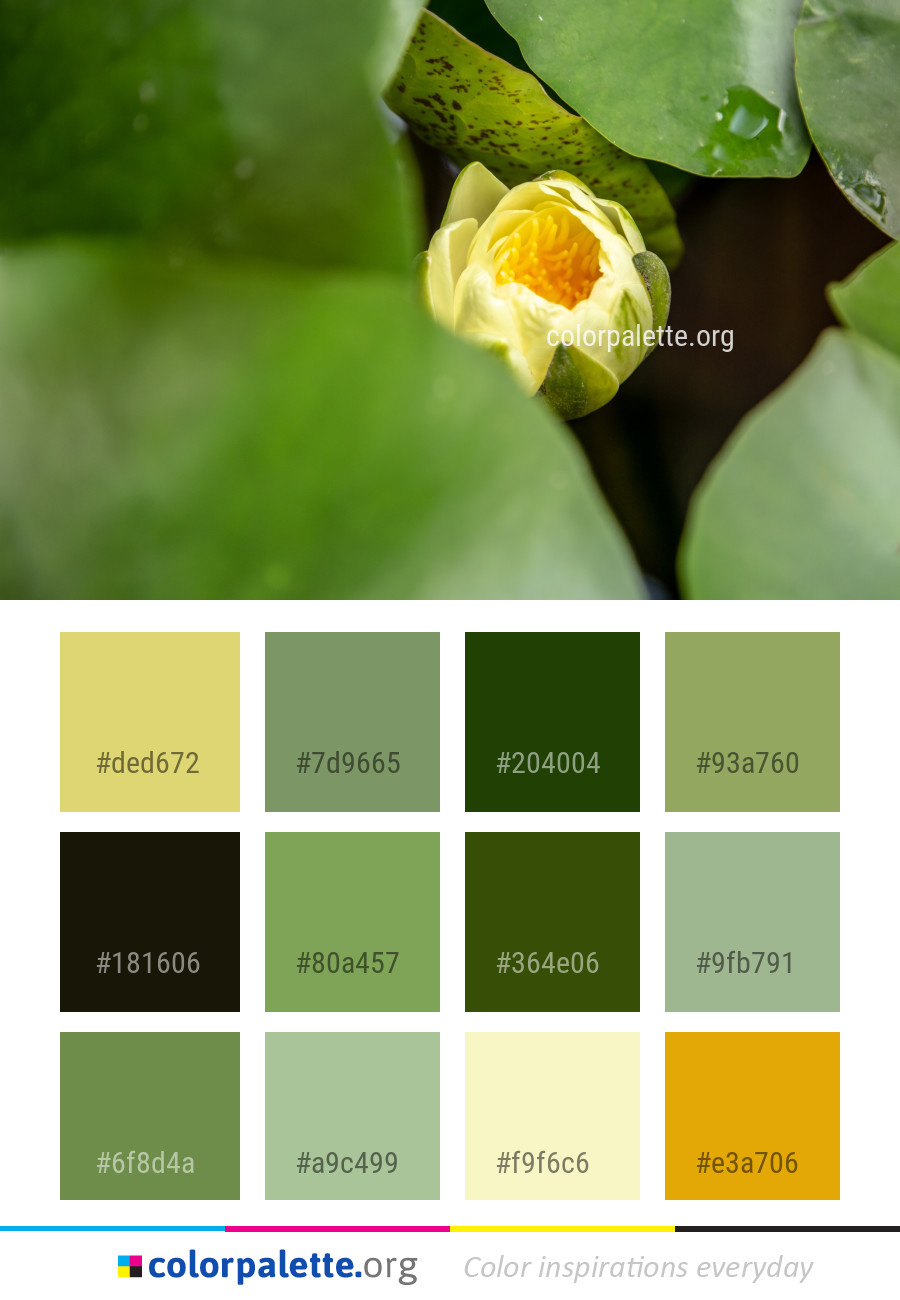 Flower Green Yellow Color Palette   colorpalette.org