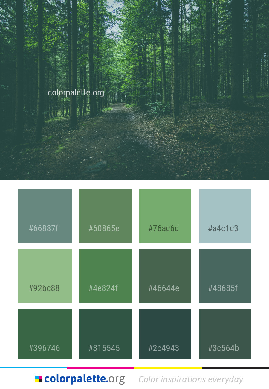 Forest Green Nature Color Palette | colorpalette.org