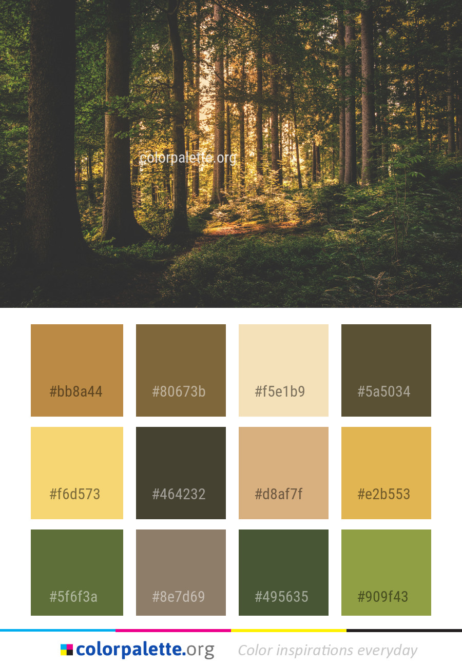 palette nature forest woodland colour colors palettes schemes pallete pallette kitchen autumn colorpalette combos card spruce
