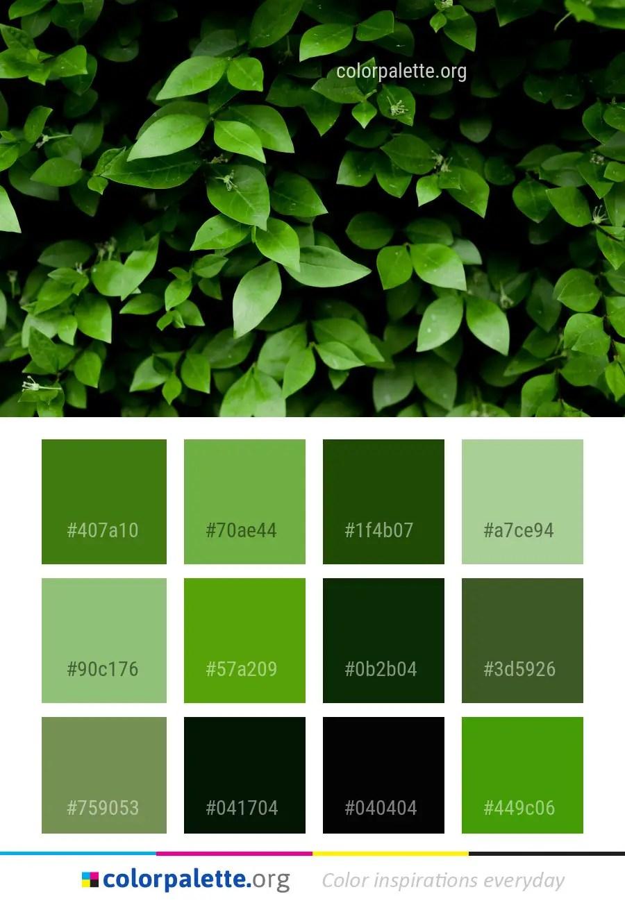 Green Plant Leaf Color Palette Colorpalette Org