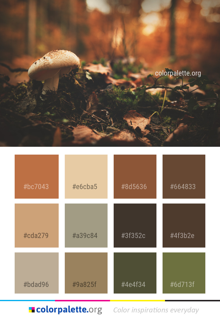 Mushroom Fungus Sunlight Color Palette Colorpalette Org