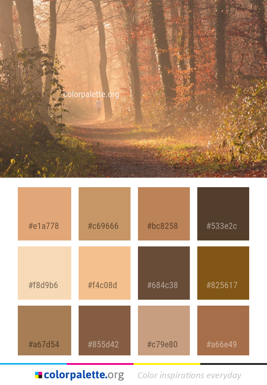 Nature Woodland Forest Color Palette Colorpalette Org