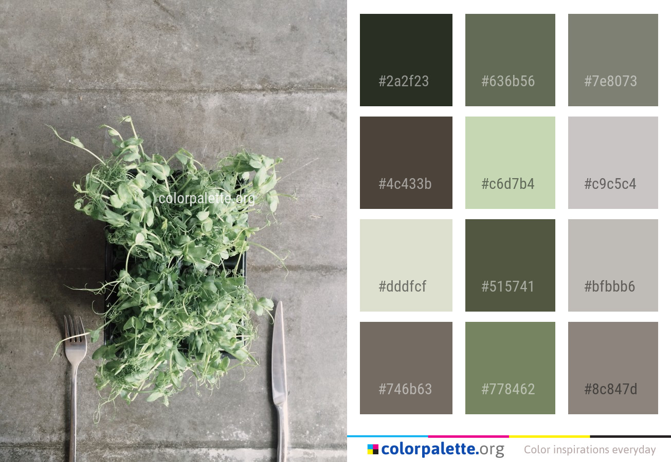 Plant Leaf Herb Color Palette Colorpalette Org