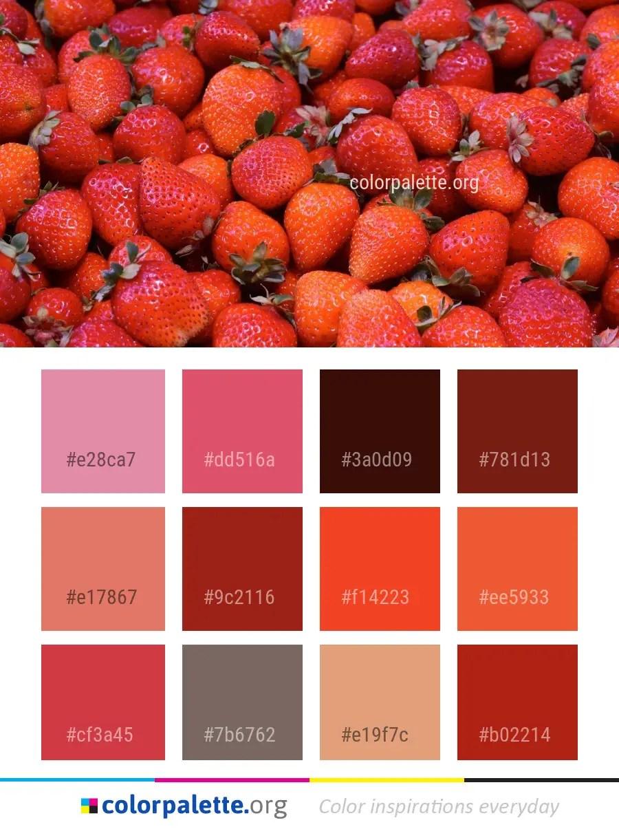 Natural Foods Color Palette Ideas Colorpalette Org