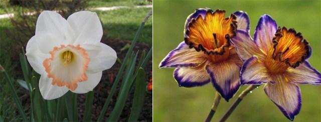 Гибриды цветка