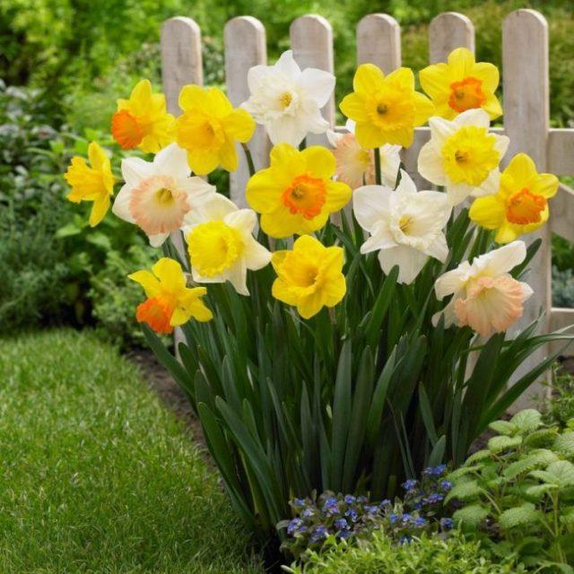 Необычный дизайнерский ход – высадить цветы в форме букета