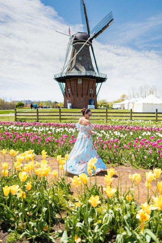 holland, michigan, tulip, tulip time, festival, blue dress, tulip farm, windmill, windmill in us, floral, floral dress, flower, field, flower field, colors, colorful, colorsofmei, colorsofmay