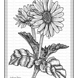 Gerbera Daisy Coloring Page