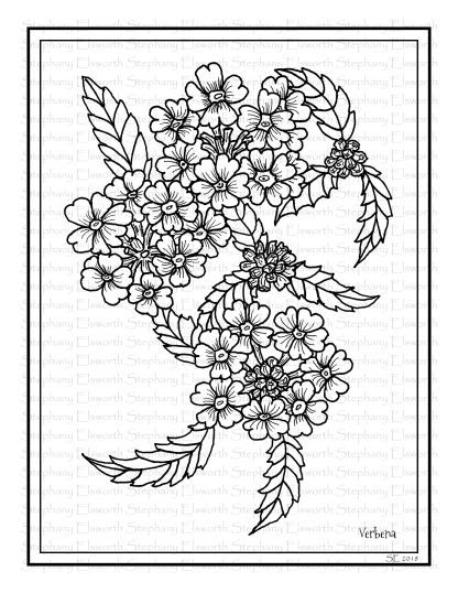 Verbena Flowers Coloring Page
