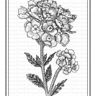 Verbena Flower Coloring Page