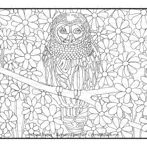 Owl and Daisies