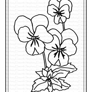 simple pansy coloring page