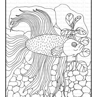 Betta Fish Free Coloring Page
