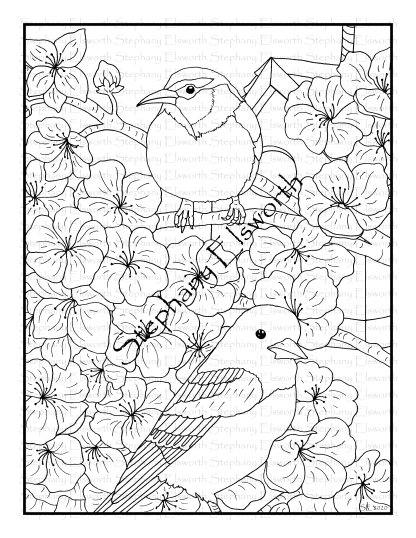 Oriole and Cherry Blossoms Coloring Page