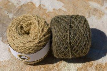 Mugwort / Artemisia vulgaris / gråbynke