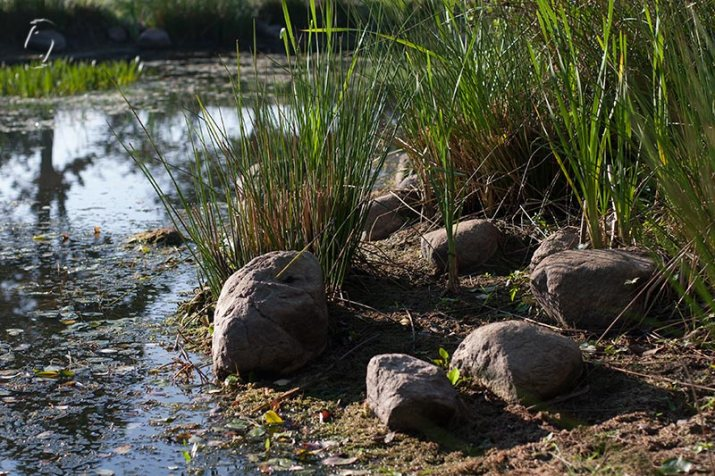 Neighbour's pond