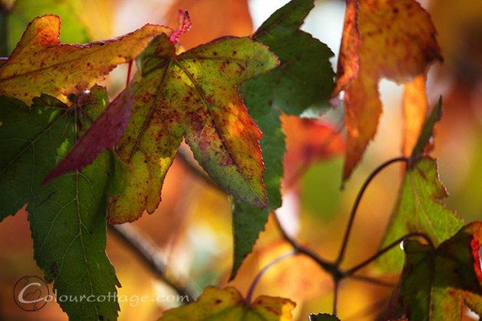 autumn14_03