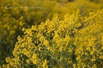 flowers abundant