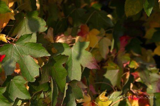 fall16b