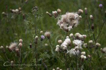 meadow16_04